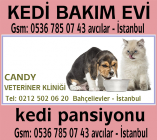 Candy Veteriner Kliniği